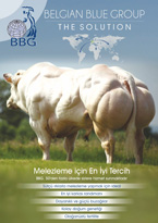 Belgian Blue Group