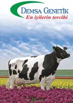 2015 Boğa Katalogu